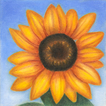 'Mini Sunflower'